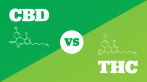 cbd vs thc what are the main differences 297486