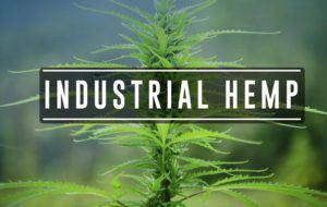 industrialhemp
