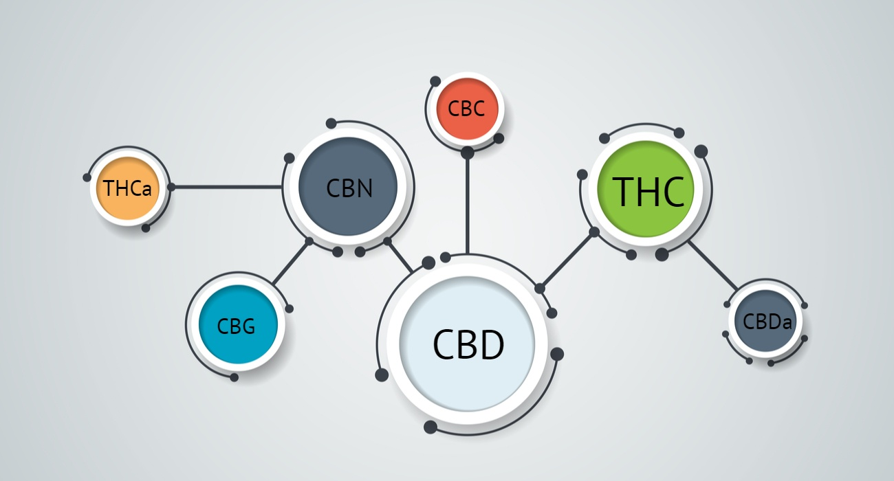 different cannabinoids