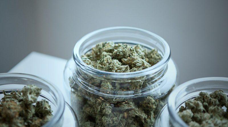 the best cbd hemp flower strains and their effects