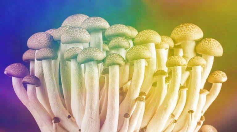 what are shrooms? exploring psilocybin