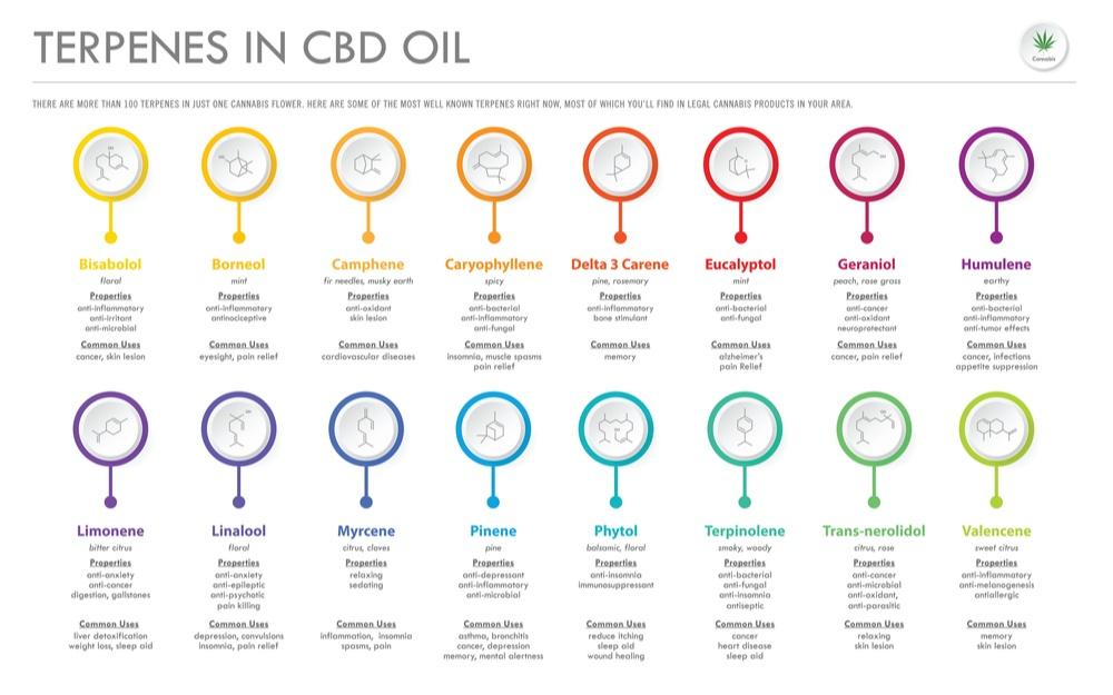 terpenes in cbd oil