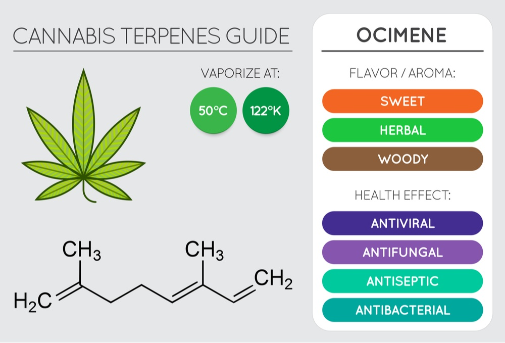 ocimene cannabis terpene