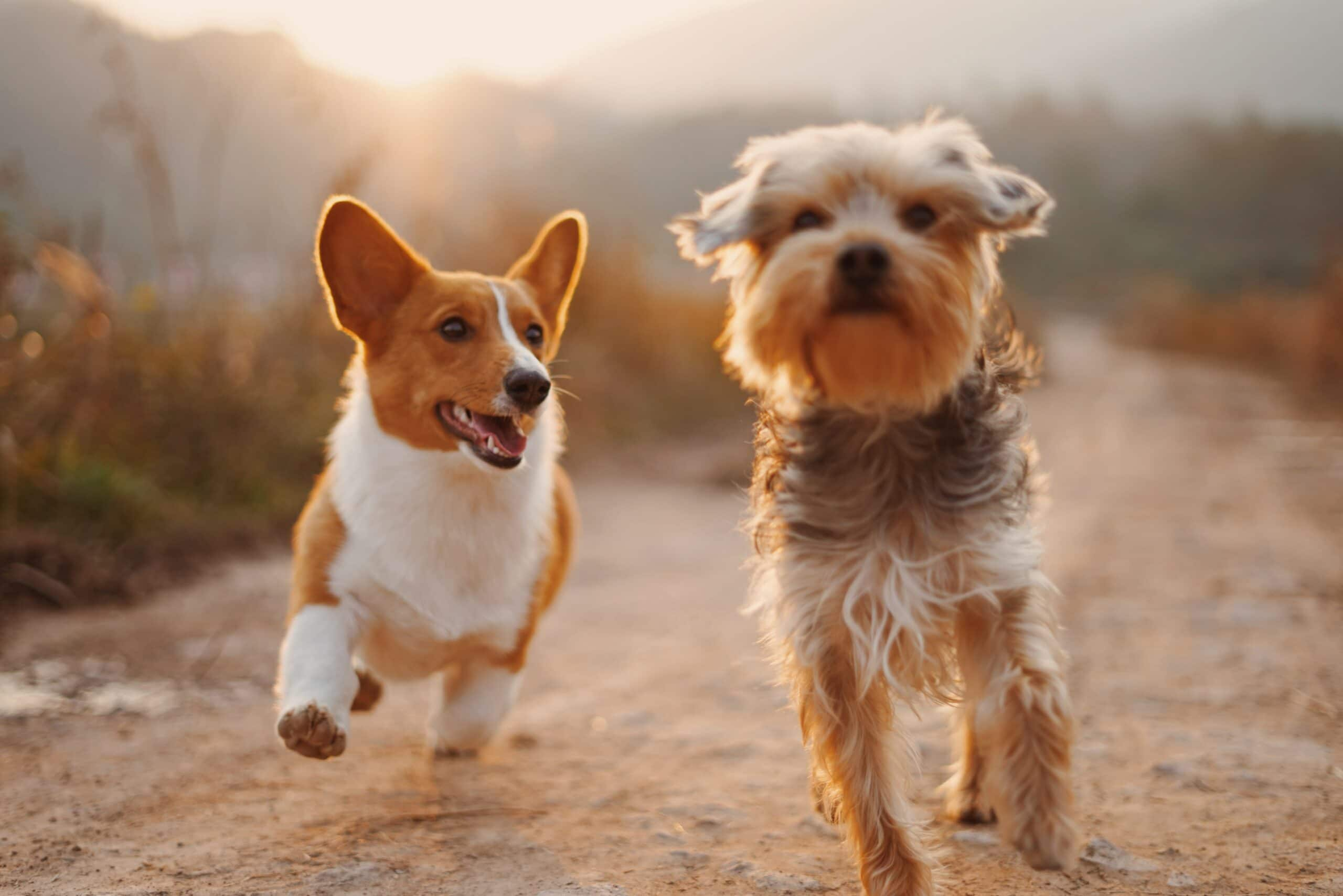 best cbd oil for dogs in canada